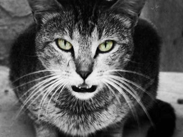 hellish-cats (20)