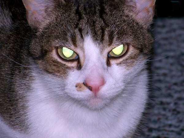 hellish-cats (21)