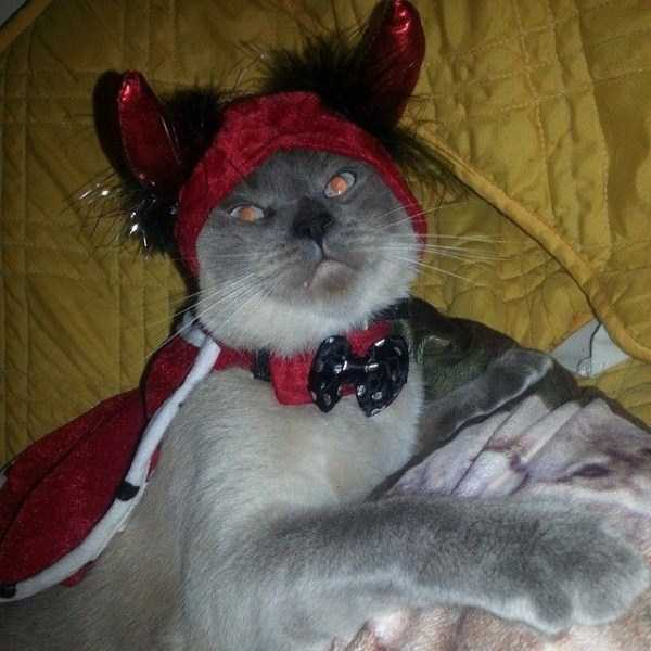hellish-cats (23)