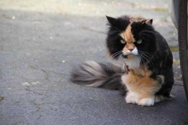 hellish-cats (25)