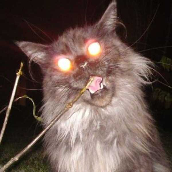hellish-cats (26)