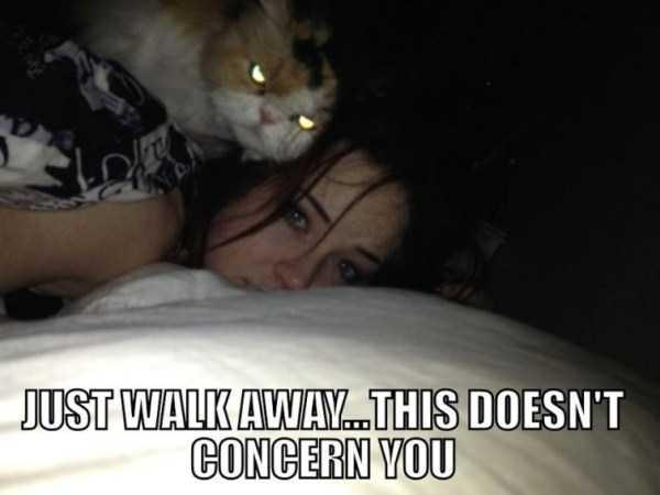 hellish-cats (28)