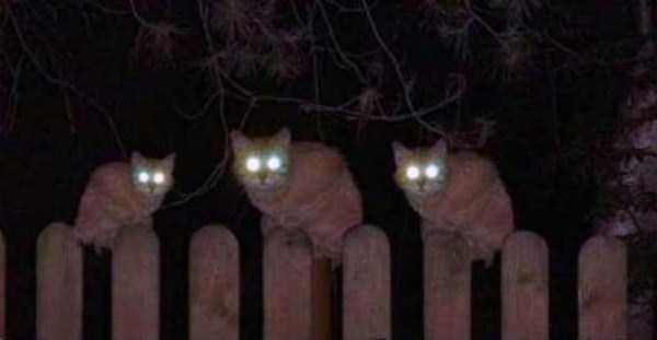 hellish-cats (3)