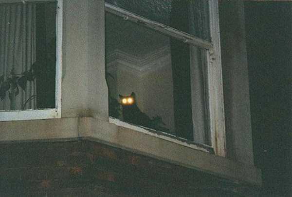 hellish-cats (31)