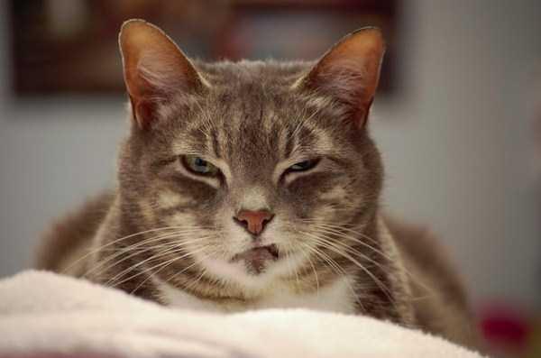 hellish-cats (32)