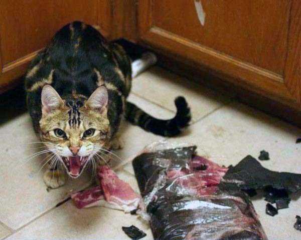 hellish-cats (34)