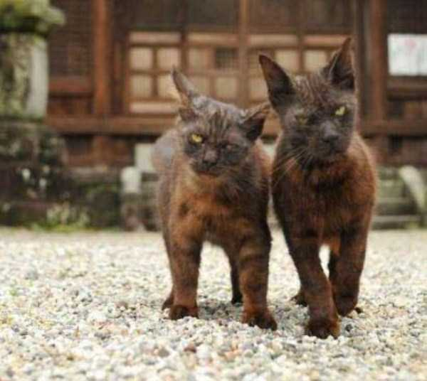 hellish-cats (35)