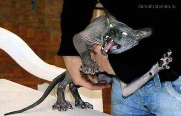 hellish-cats (4)