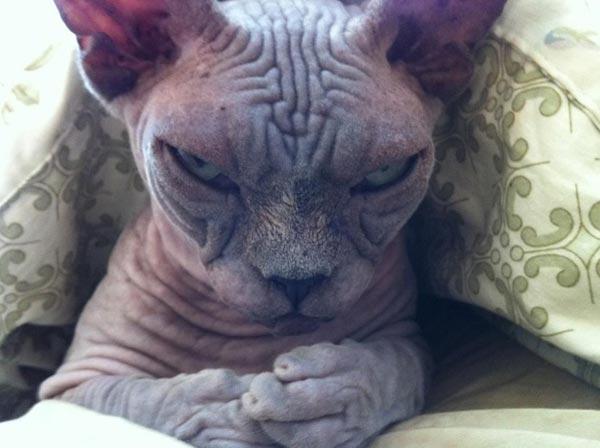 hellish-cats (40)