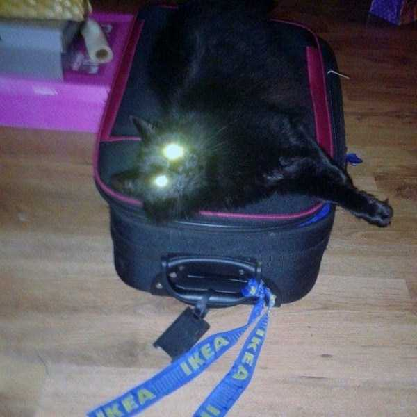 hellish-cats (5)