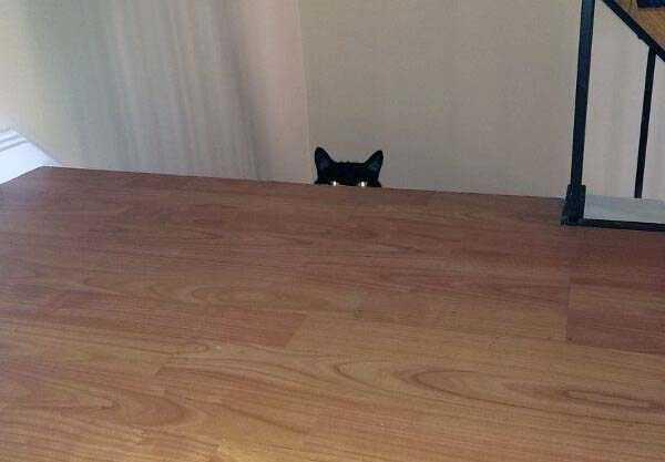 hellish-cats (6)
