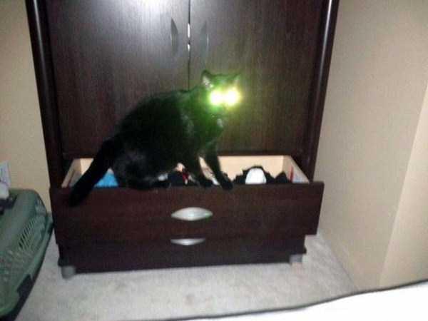 hellish-cats (8)