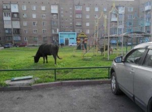Russia is Simply Different (52 photos) 14
