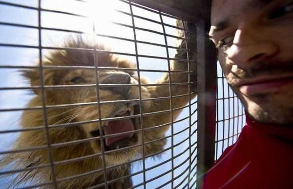 Safari-Lion-Zoo-in-Rancagua-Chile (1)