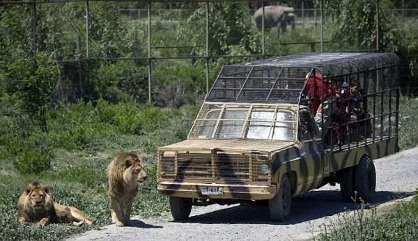 Safari-Lion-Zoo-in-Rancagua-Chile (8)