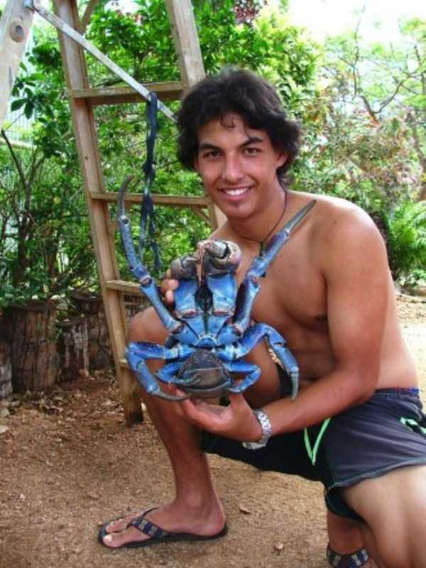 coconut-crabs (18)
