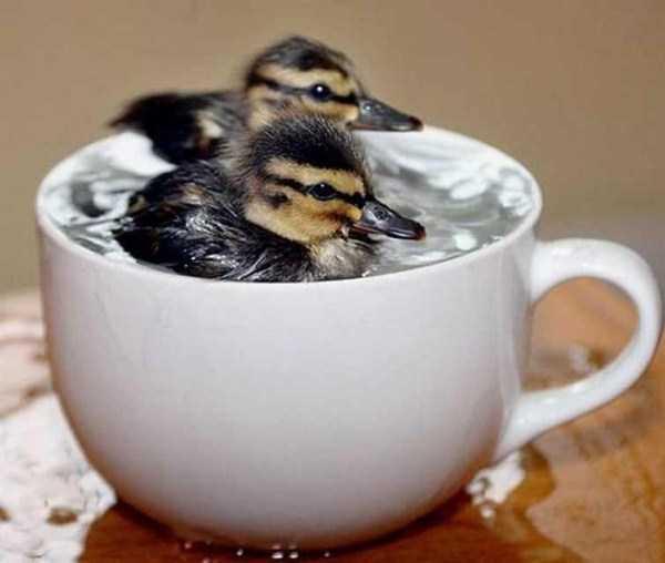 cute-animals-in-cups (1)