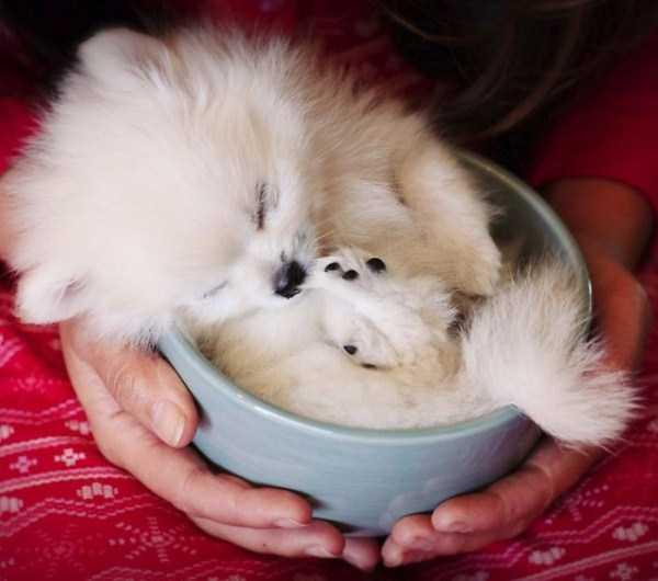 cute-animals-in-cups (10)