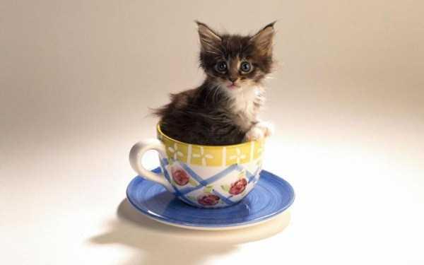 cute-animals-in-cups (12)