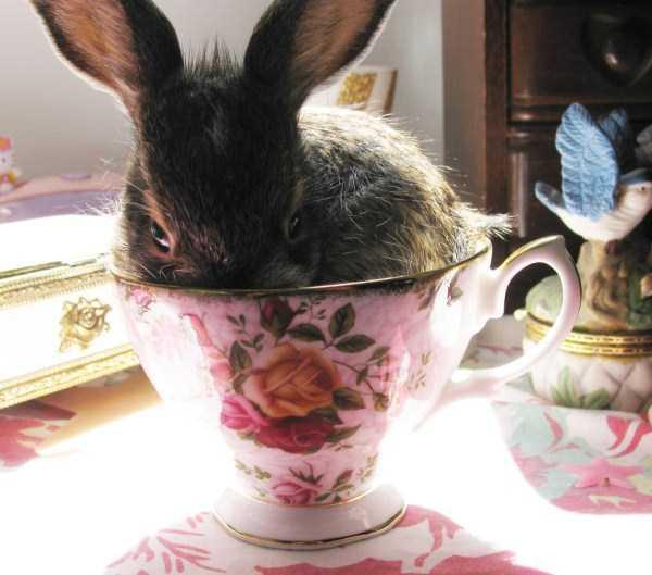 cute-animals-in-cups (13)