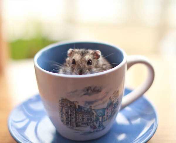 cute-animals-in-cups (14)