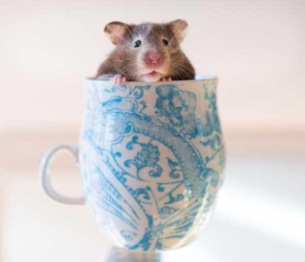 cute-animals-in-cups (16)