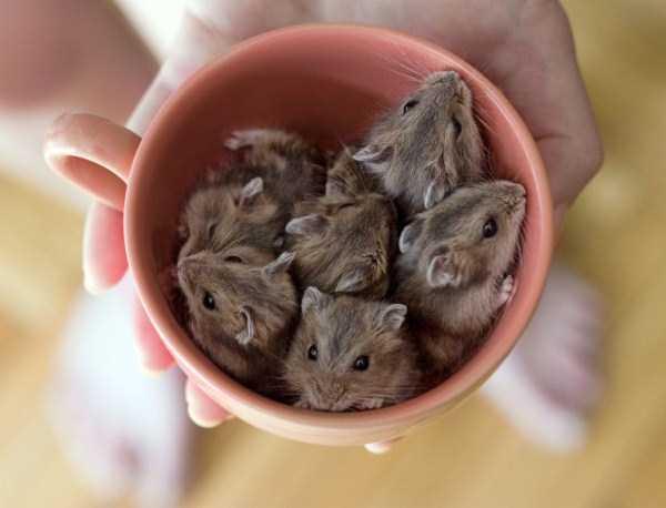 cute-animals-in-cups (17)