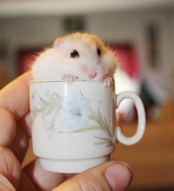 cute-animals-in-cups (18)