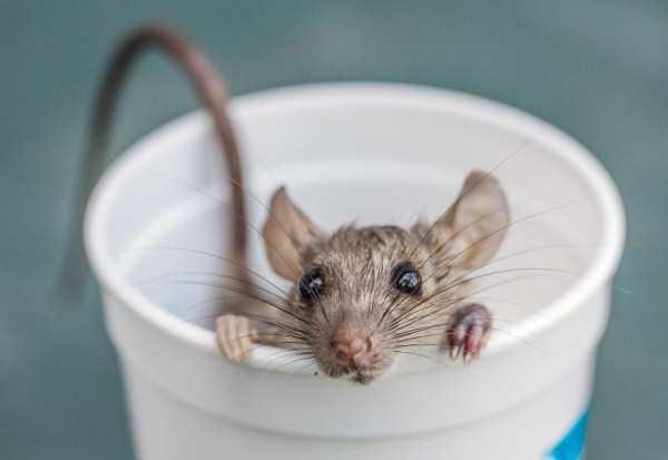 cute-animals-in-cups (19)