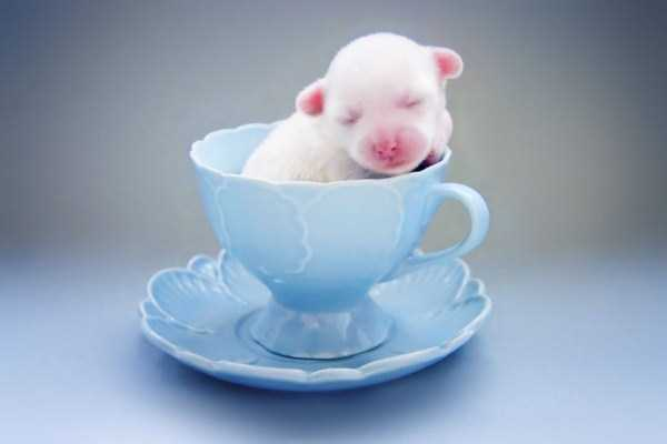 cute-animals-in-cups (20)