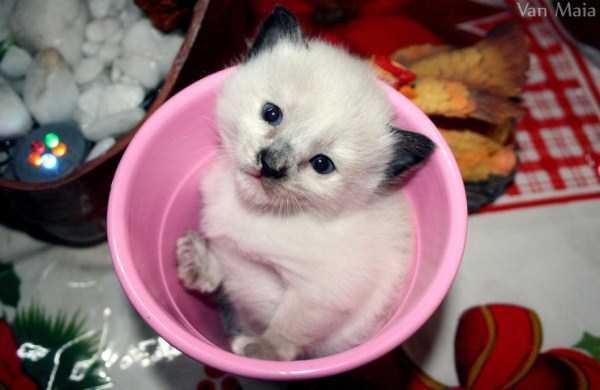 cute-animals-in-cups (22)