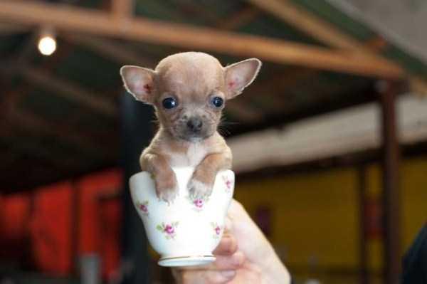 cute-animals-in-cups (23)