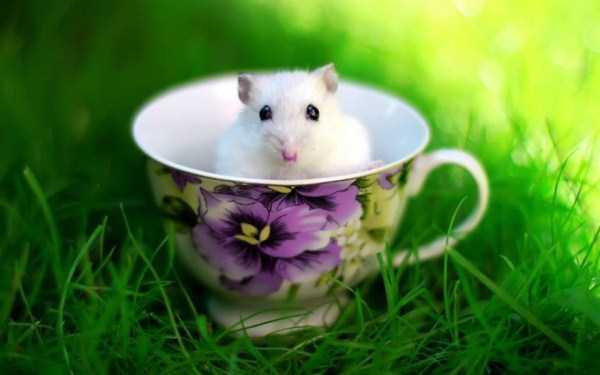 cute-animals-in-cups (24)