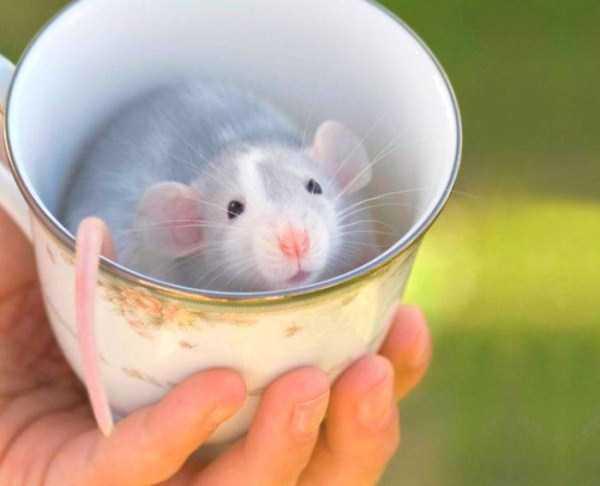 cute-animals-in-cups (25)