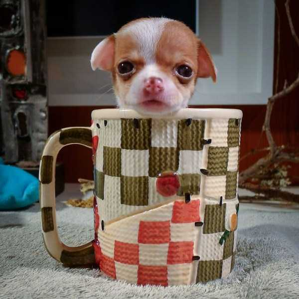 cute-animals-in-cups (27)