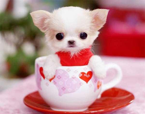 cute-animals-in-cups (3)