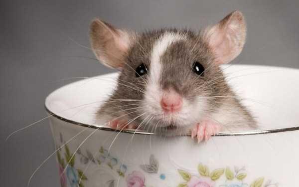 cute-animals-in-cups (31)