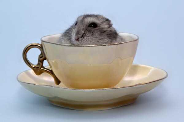 cute-animals-in-cups (32)