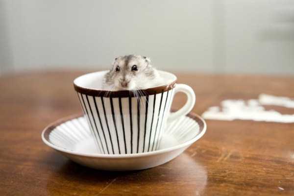 cute-animals-in-cups (33)