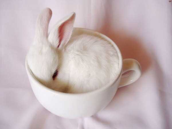 cute-animals-in-cups (34)
