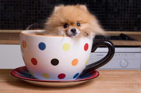 cute-animals-in-cups (35)