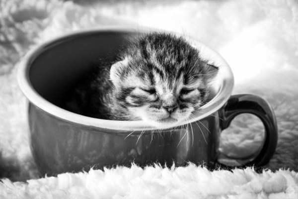 cute-animals-in-cups (36)