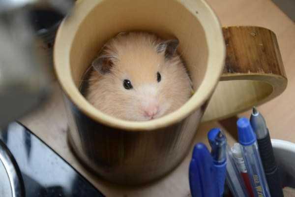 cute-animals-in-cups (37)