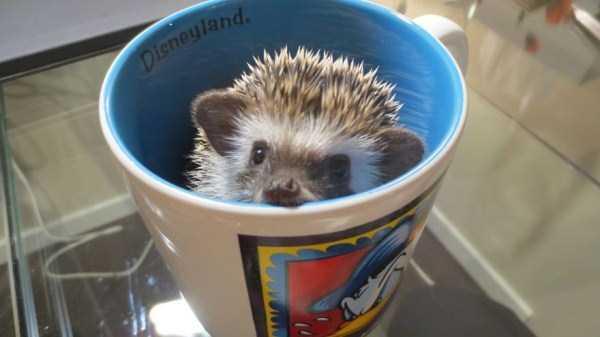 cute-animals-in-cups (38)