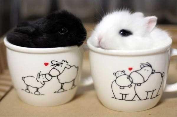 cute-animals-in-cups (39)