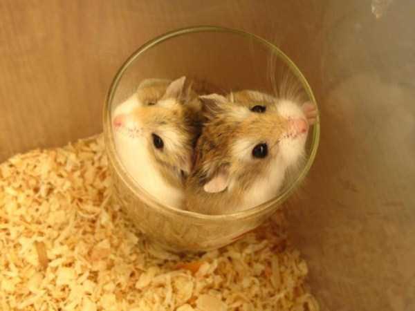cute-animals-in-cups (4)
