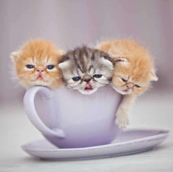 cute-animals-in-cups (40)