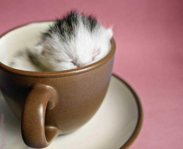 cute-animals-in-cups (41)