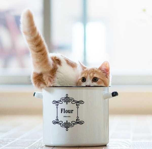 cute-animals-in-cups (42)