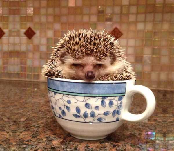 cute-animals-in-cups (43)